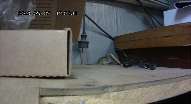 une souris n 39 abandonne jamais vid os mdr. Black Bedroom Furniture Sets. Home Design Ideas