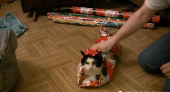 Comment emballer un chat pour no l vid os mdr - Comment coucher avec un homme pour la premiere fois ...