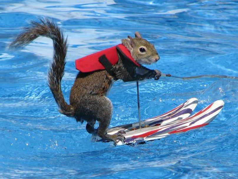 Je voudrais... Ecureuil-qui-fait-du-ski-nautique-sur-l-eau-avec-un-gilet-de-sauvetage-trop-mignon-marrant-incroyable
