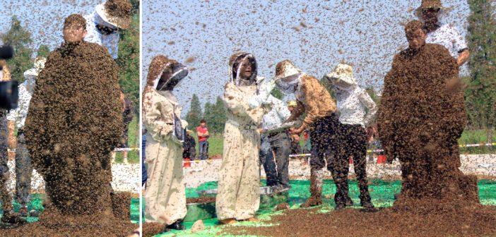 Un chinois s'est fait recouvrir de plus de 600 000 abeilles pour battre un record du monde