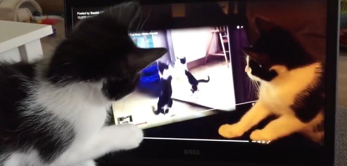 Confus, un chat se regarde en train de jouer dans une vidéo dans laquelle il s'attaque lui-même !
