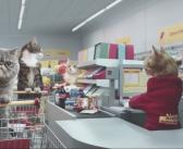 Quand des chats font leurs courses dans un supermarché Netto