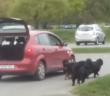 faineant-il-promene-chiens-dans-sa-voiture-wtf-incroyable