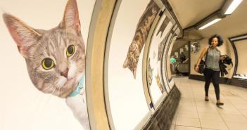 chat-metro-londres-glimpse-campagne-sensibilisation-adoption-chats-clapham-common