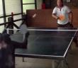 singe joue au tennis de table