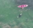 il-saute-de-kayak-baigner-avec-orque-incroyable