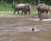 En Thaïlande, un éléphant sauve un homme de la noyade
