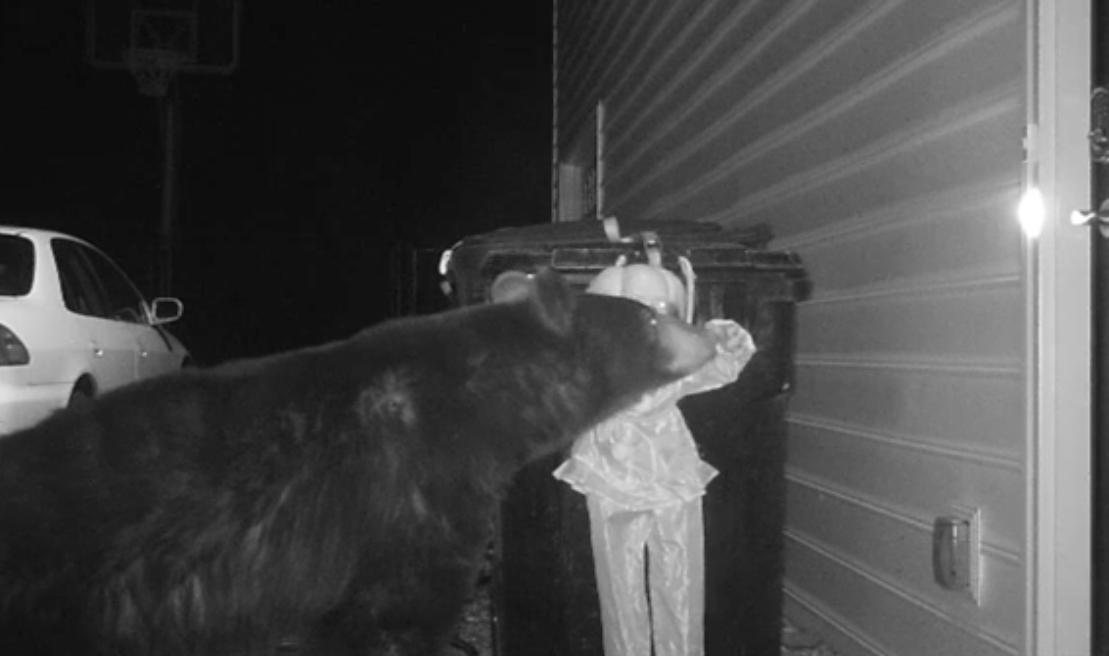 La solution flippante contre les ours qui fouillent les poubelles - Solution radicale contre les souris ...