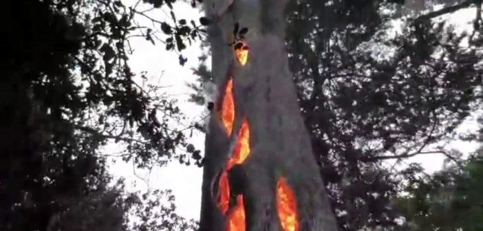 Un arbre brûle de l'intérieur en Californie