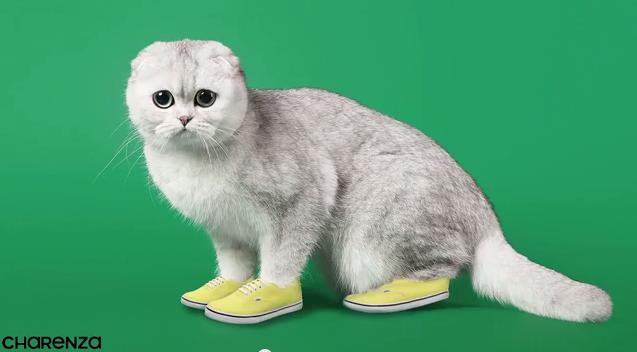 numero des put chat en ligne sexy