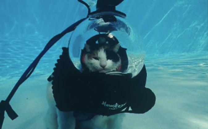Insolite un chat dans un scaphandrier fait de la plong e for Apprendre a plonger dans la piscine