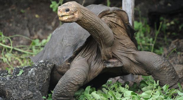 Cette tortue danse le twerk sous la douche mieux que miley - Faire l amour sous la douche avec un preservatif ...