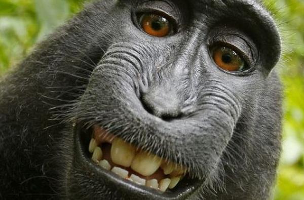 photo drole de singe