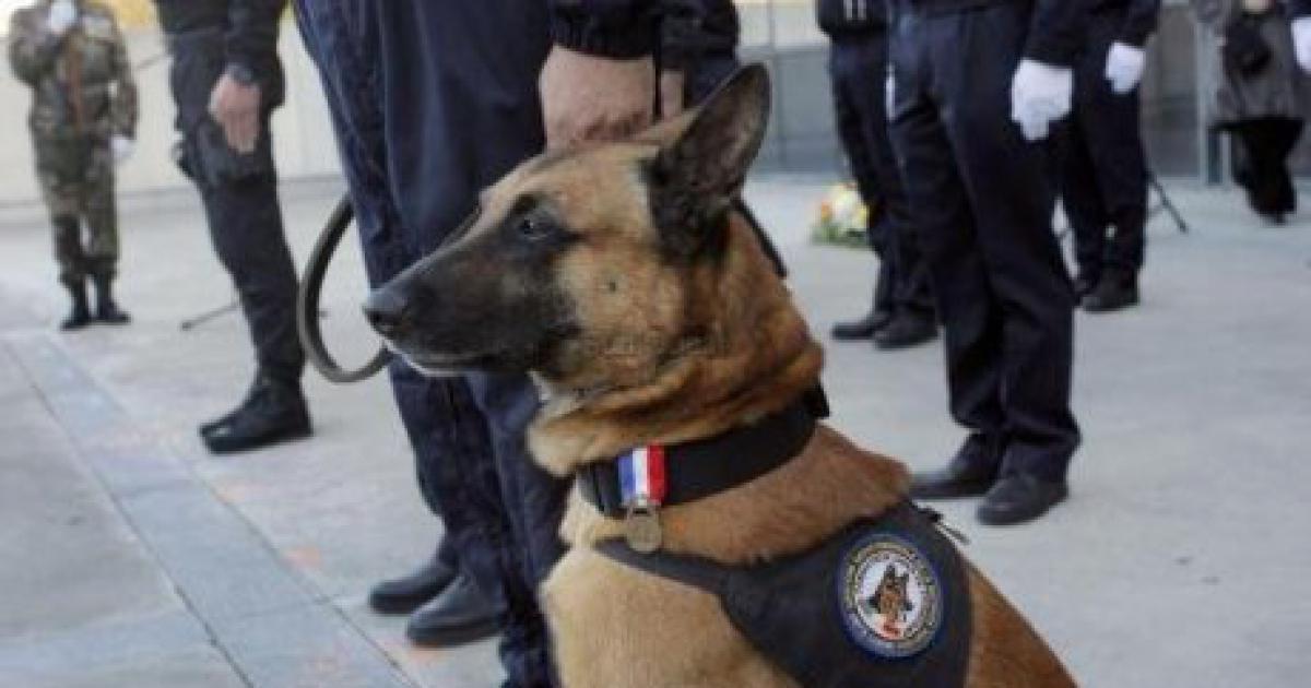 La mort de Diesel, chien du Raid, à ému le monde entier