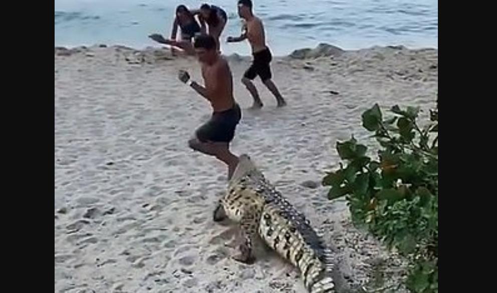 Un crocodile sème la panique sur une plage très fréquentée !