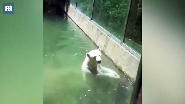Un ours polaire attrape un oiseau et tente de le ramener à la vie !